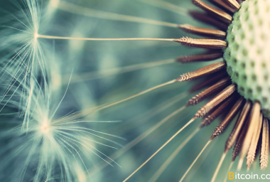 New Dandelion Proposal Aims to Anonymize Bitcoin Transaction Broadcasts