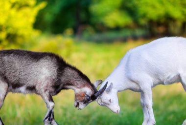 Bitfinex Slaps a Lawsuit on Its Nemesis as the Tether Squabble Gets Ugly