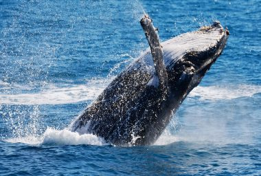 The 'Mt Gox Whale' Explains His Crypto-Selling Strategy