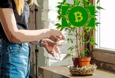 Spring Sees Bitcoin Cash Adoption Rise