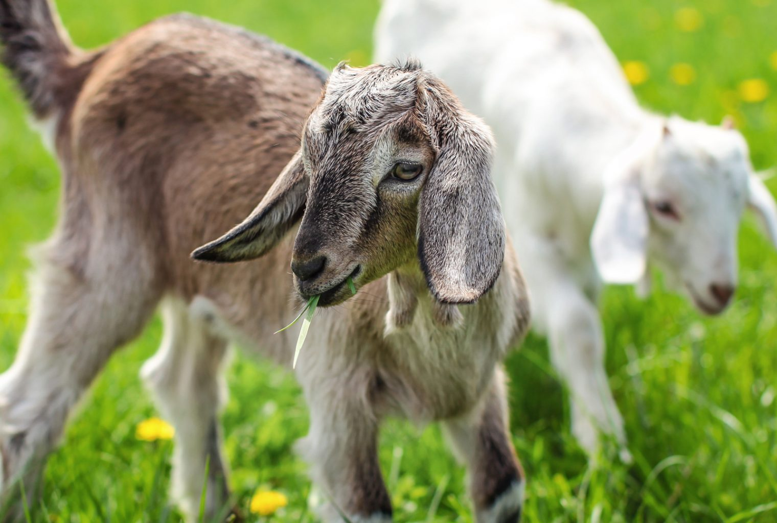 Feed 7 Different Species at the River Forest Farm's 'Bitcoin Cash Zoo'